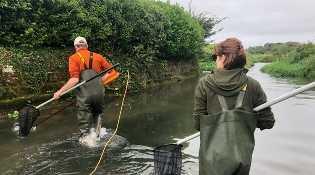 Parr tagging on the Frome